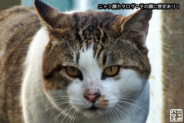 ニャン顔NO108 サバトラ猫さん