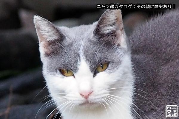 ニャン顔NO114 ハイシロ猫さん