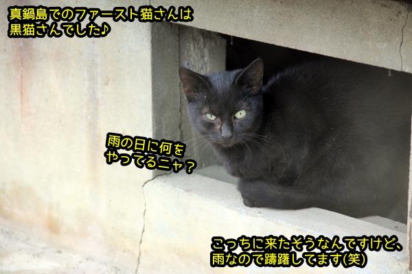ニャポ旅44 猫島 真鍋島散策1