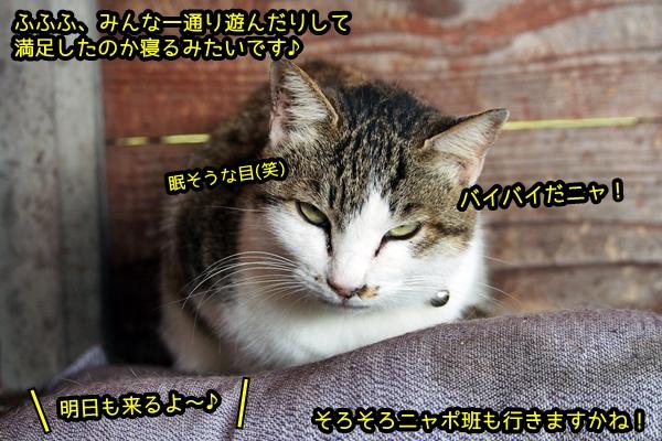 ニャポ旅44 猫島!真鍋島散策2