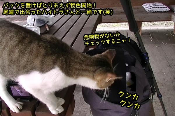 ニャポ旅44 真鍋島 猫 その4