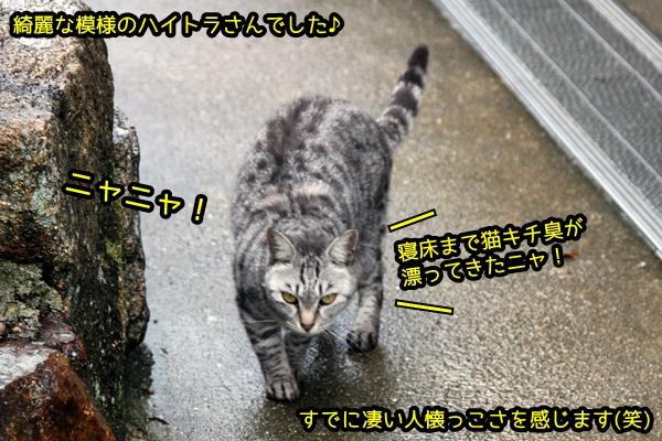 ニャポ旅44 真鍋島 路地と猫さん 5