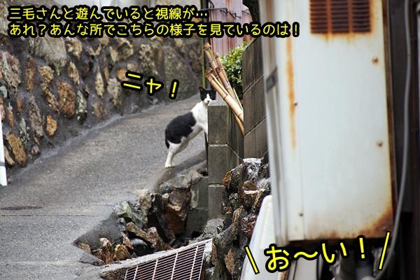 ニャポ旅44 雨 真鍋島 猫島 6