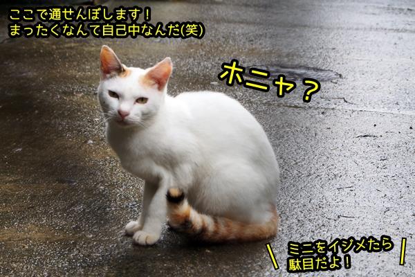 ニャポ旅44 真鍋島 猫島 7