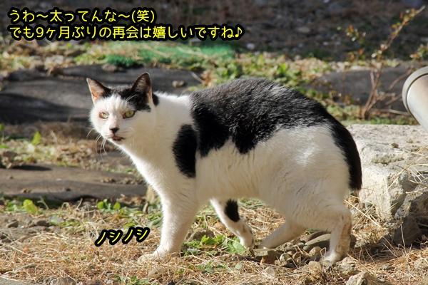 ニャポ旅46 伊豆下田3