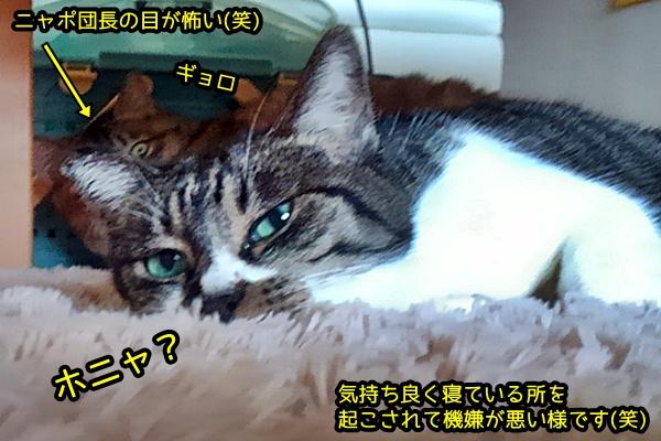 ホットカーペット お昼寝 猫
