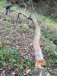 171201倒木