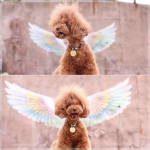 吠える天使