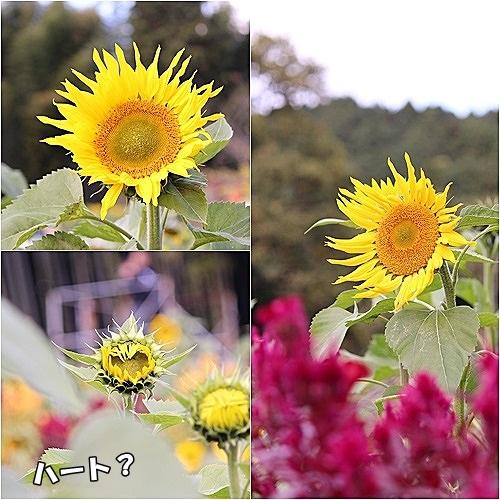 s-ひまわり園