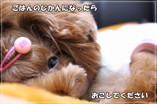 s-IMG_9012.jpg