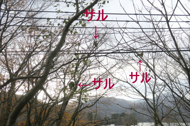IMG_4767.jpg