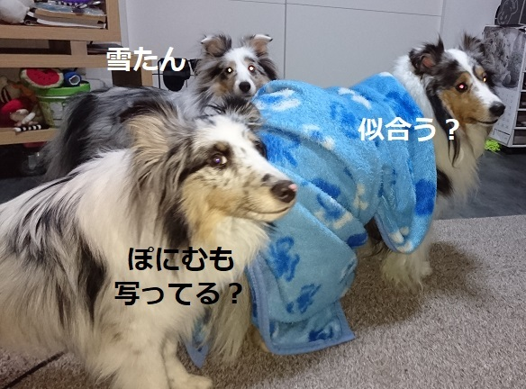 DSC_6173.jpg