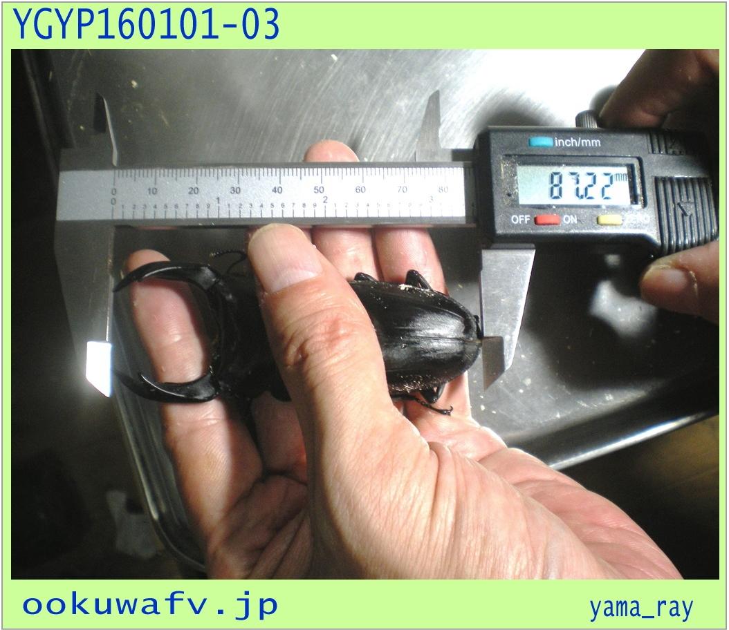 〇〇〇YGYP160101-03