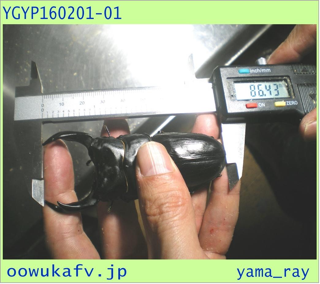 〇〇〇YGYP160201-01