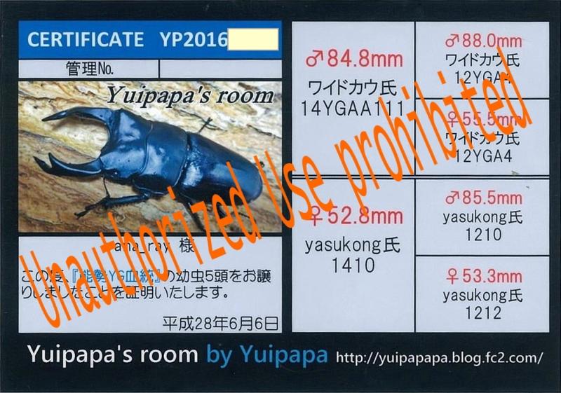 Yuipapa-1609.jpg