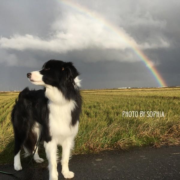 虹の向こうには