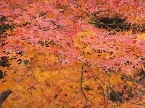 NagahamaKurokabe1_000_org.jpg