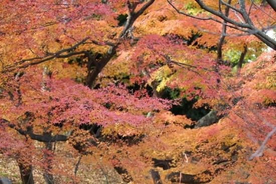 NagahamaKurokabe1_001_org.jpg