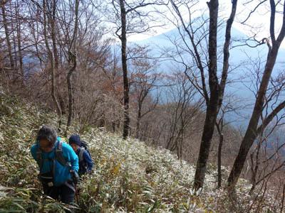 笹藪と富士山