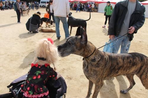 動物愛護フェスティバル2017