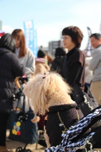 Smiledog Festa TEN-SHIBA