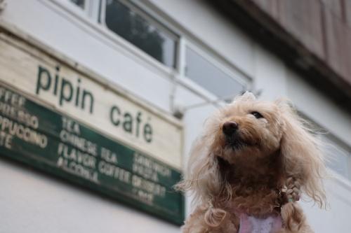 pipin cafe