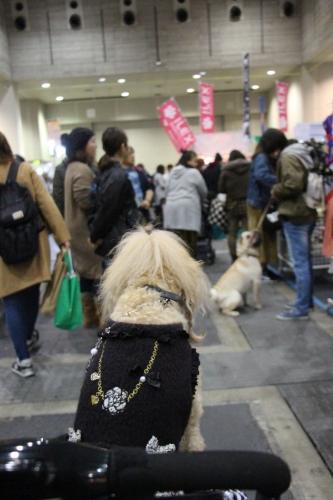 大阪ドッグフェスティバル2017