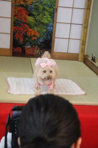 宝塚動物霊園七五三