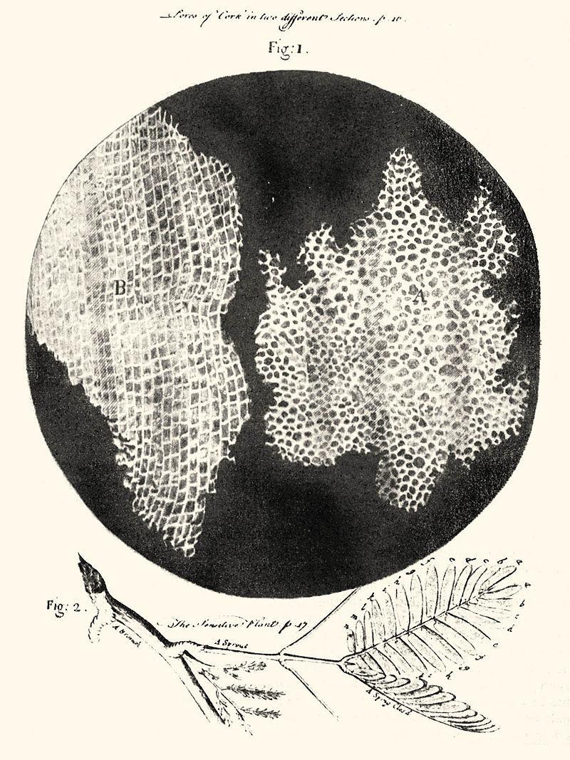 「生物学」の勃興、それは江戸時代のお話です
