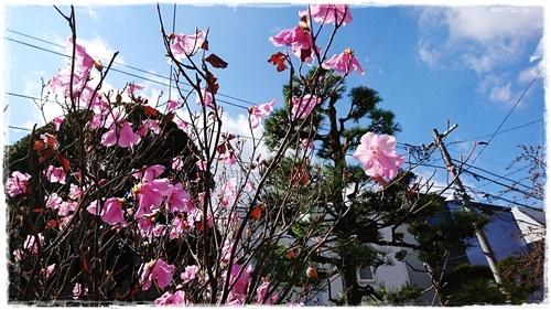 台風DSC_0714