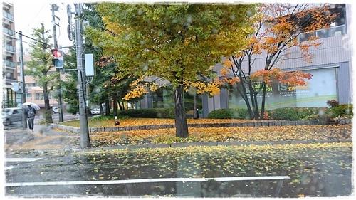 台風DSC_2653