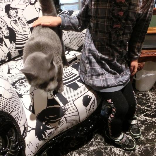 パンタレイ panta rhei 大田区 池上 ギャラリー 猫 ねこ ダミアン