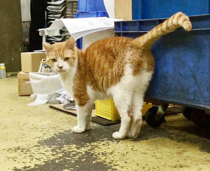 大田区 池上 パンタレイ panta rhei イワキ精工 シルバー 真鍮 アクセサリー ギャラリー ざぼん 猫