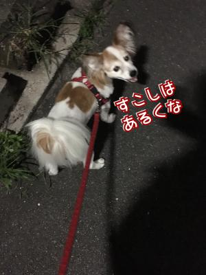 fc2blog_20171016014044734.jpg