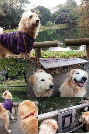 美しくなった池
