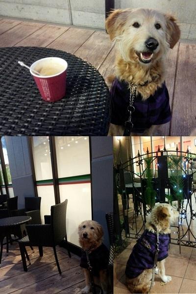 カフェちゃうで