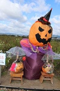 2017.11.05 亀岡夢コスモス園-8