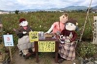 2017.11.05 亀岡夢コスモス園-12