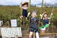 2017.11.05 亀岡夢コスモス園-16