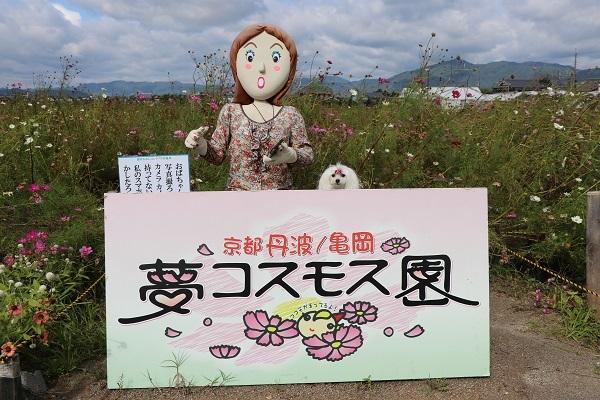2017.11.05 亀岡夢コスモス園-25