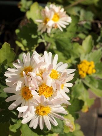 my-garden 138