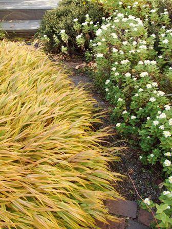 my-garden 114 (2)
