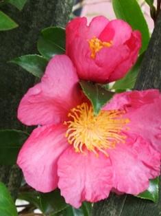 my-garden 006 (3)