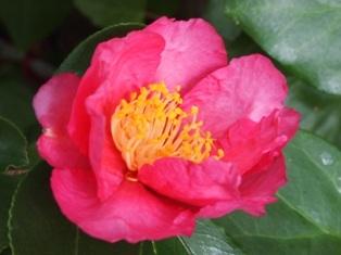 my-garden 005