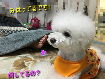 IMG_6647c.jpg