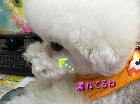 IMG_6681c.jpg