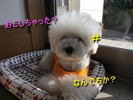 IMG_6853c.jpeg