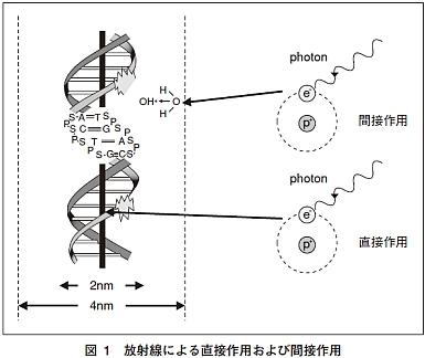 電子DNA
