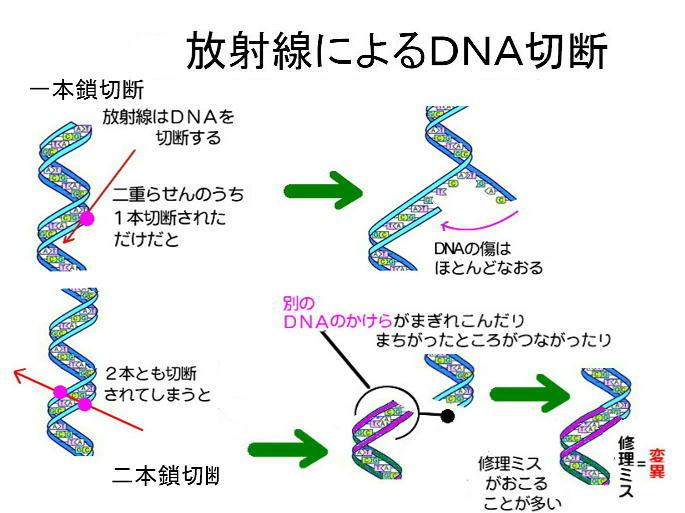 電子DNA2