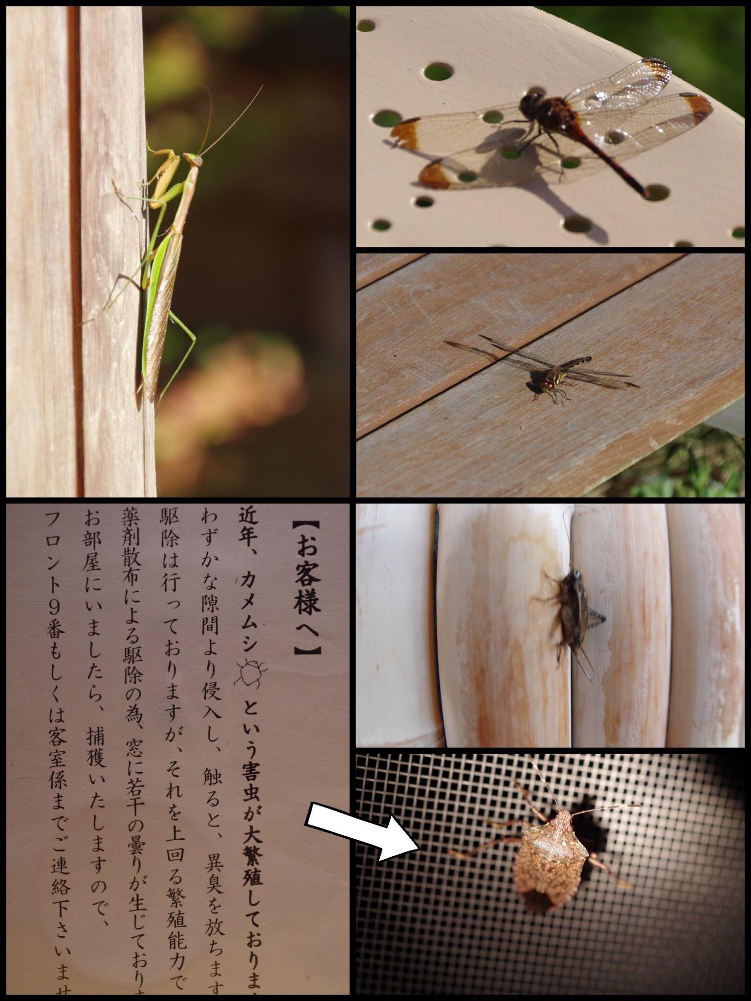 山形 上山温泉 名月荘 扇 宿泊記 昆虫 カメムシ
